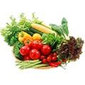Бизнес план теплицы по выращиванию: плюсы и минусы своего хозяйства