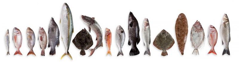 Франчайзинг рыбных розничных сетей в России